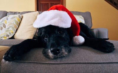 Keeping your pets safe at Christmas time; The Christmas Dangers you might not have thought about, be sure to paws for thought