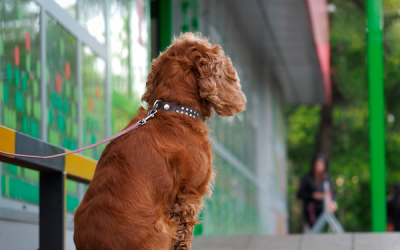 Dog Theft; The problem, prevention, and how we can help.