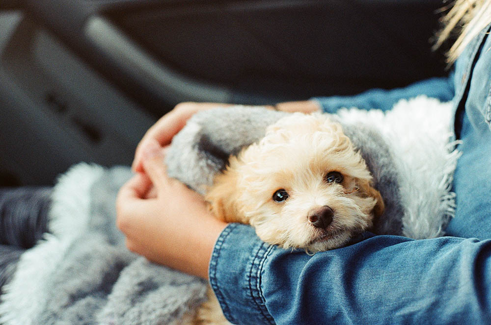 Why pets are great for our wellbeing and mental health
