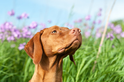 Is your dog allergic to spring?