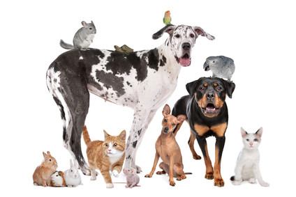 The rise of the pet population