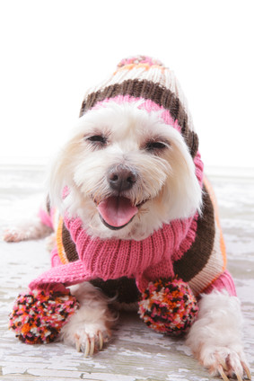Tips to keep your pet warm this winter