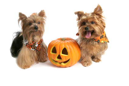 Planning a spook-free Halloween for your pet