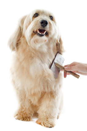 Live online dog grooming Q & A review