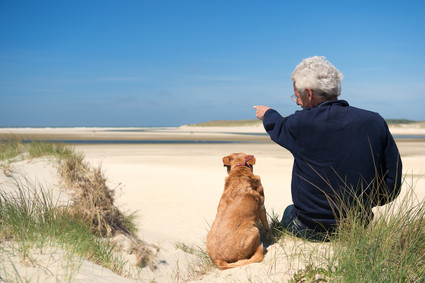 Dog-friendly parks and beaches – myth or reality?