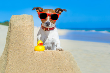 How to keep your pet cool this summer