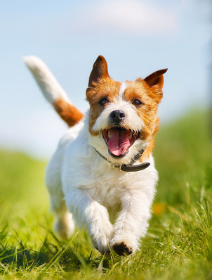 That doggie itch – beware of flea bites and tick bites this summer