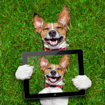 Pet apps – what's appening in the pet app world?