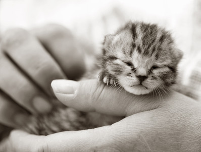 Top ten kitten names for 2014