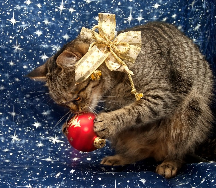 Pet-proofing for the festive season