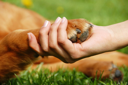 Neutering your dog– nasty or nice?